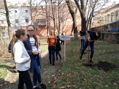 У Чернівцях школярі із вчителями висадили Алею творчості (ФОТО)