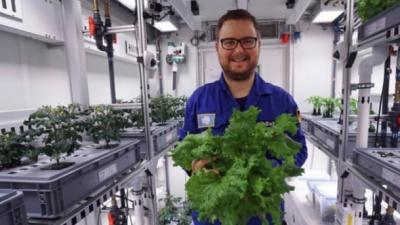 Науковці виростили овочі в Антарктиді: захопливі фото