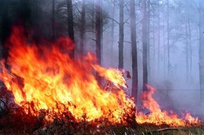 У Чернівецькій області підвищиться пожежна небезпека