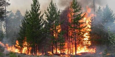 На Чорнівському сміттєзвалищі біля лісу сталася пожежа