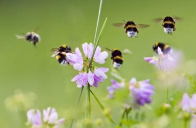 Садівників просять не труїти бджіл пестицидами та агрохімікатами
