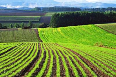 Українці масово скуповують землю в Польщі