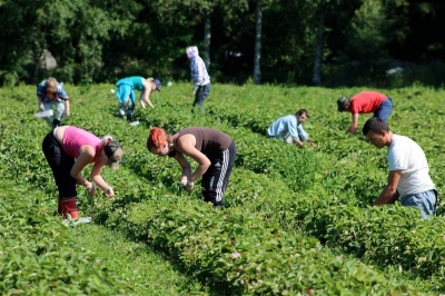 Трудові мігранти за 2017 рік привезли в Україну понад 9 млрд доларів