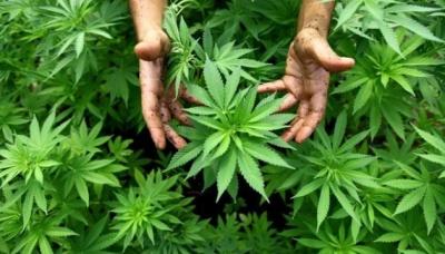 Канада готується легалізувати марихуану