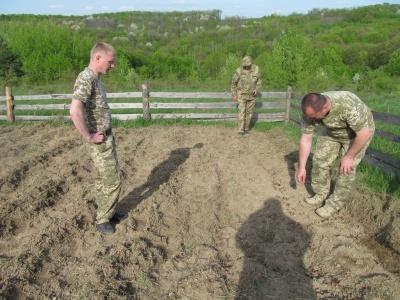 У Чернівецькій області школярі допомагають висаджувати ліс