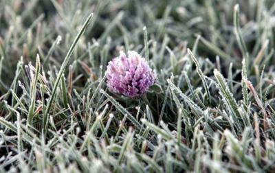 На Буковині очікуються заморозки
