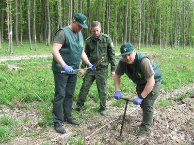 На Буковині школярі і лісівники висадили 20 га дубового лісу
