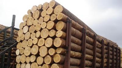"""Україна та Єврокомісія погодили """"нейтральних"""" арбітрів у справі щодо заборони експорту ліса-кругляка"""