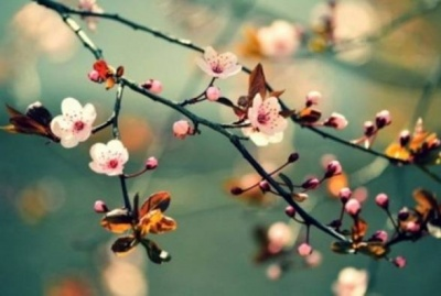 Синоптики розповіли, якою буде погода наприкінці квітня на Буковині