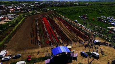 Тюльпанове поле на Буковині зняли з висоти пташиного польоту (ВІДЕО)