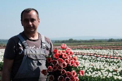 Бізнес на тюльпанах на Буковині: цибулини втратив на митниці, гроші відробляв цілий рік