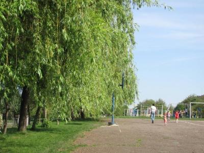 У Чернівцях у шкільному дендропарку ростуть понад 100 видів дерев (ФОТО)