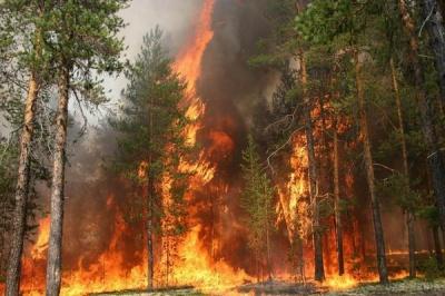У Чернівцях рятувальники попередили про небезпеку лісових пожеж