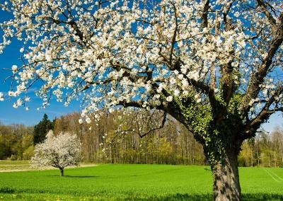 Квітень на Буковині побив рекорд температурних режимів