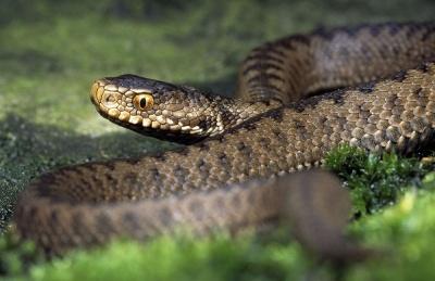 «Була б сироватка – одужав би швидше»: стало відомо про стан юнака, якого на Буковині вкусила змія