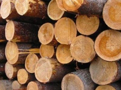 На Буковині лісівники посеред ночі затримали водія з поцупленою деревиною