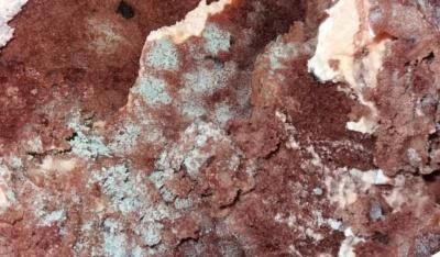 У Чернівцях жінка придбала торт із пліснявою: як повернути гроші за зіпсутий товар