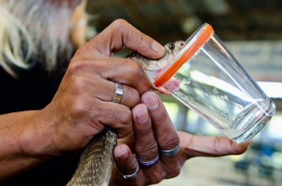 Тестувальник презервативів та продавець сліз: ТОП-25 незвичайних професій світу