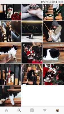 Кіт, що має сторінку в Instagram. Домашній улюбленець став постійним жителем ресторану в Чернівцях