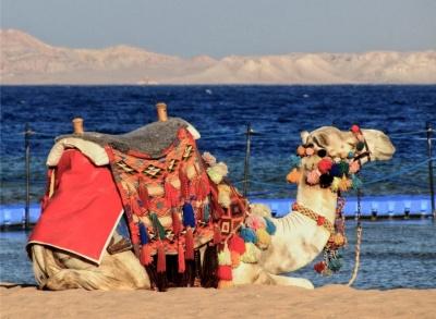 Відпочинок у Єгипті: кращі пропозиції чернівецьких турфірм (на правах реклами)