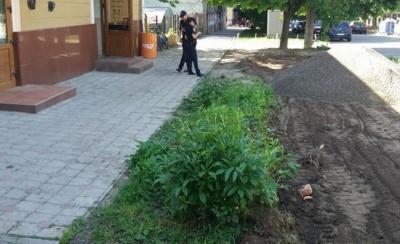 У Чернівцях у центрі міста невідомі знищили зелену зону - фото