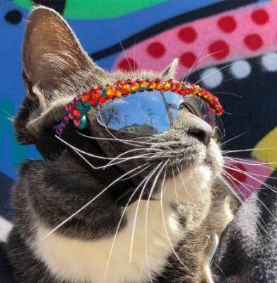 Інтернет підкорила кішка, яка носить сонячні окуляри - фото