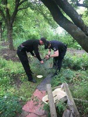«Заплутався у будівельній сітці»: як поліцейські у Чернівцях рятували їжачка - фото