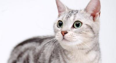 Чи можуть коти лікувати людей: пояснення науковців