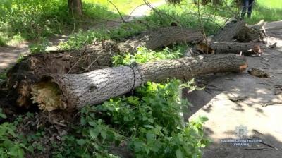 У Черкасах на школярів впало аварійне дерево