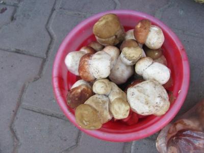 150 гривень за кіло: у Чернівцях перші гриби з'явились на місяць раніше - фото