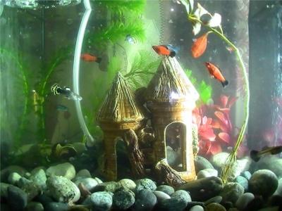 Цей день в історії: хто створив перший акваріум та де вперше навчилися заморожувати продукти