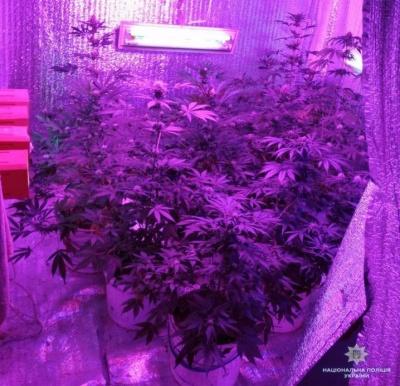 Вирощували марихуану та коноплю: на Буковині поліцейські виявили нарколабораторію - фото