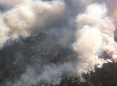 На Херсонщині пожежа охопила 100 гектарів лісу