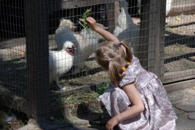 Гігантські равлики і барвисті папуги: у парку Чернівців покажуть мешканців міні-зоопарку