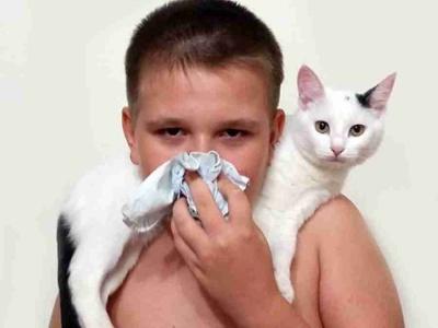 Алергія на котів: вчені знайшли спосіб, як її подолати