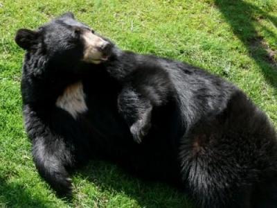 В Америці чоловік пішов врукопашну на ведмедя, щоб захистити свою собаку