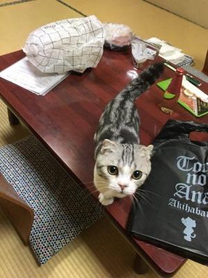 У Японії готель пропонує послугу оренди кота
