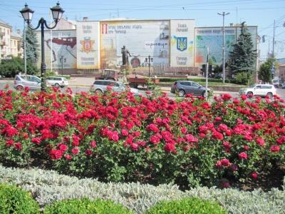 Чернівці розквітли: на міських клумбах цвітуть майже 10 тисяч кущів троянд