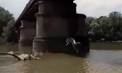 Мережу обурило відео з дівчиною, яка у Чернівцях стрибає з моста у річку