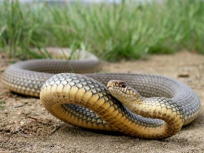 На Буковині жінку вкусила змія, коли вона поралась на городі