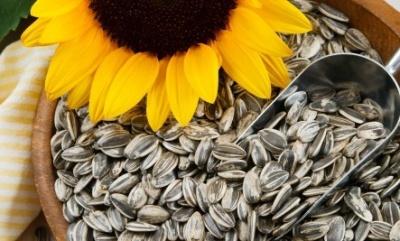 Чи можна їсти насіння соняшника зі шкіркою: відповідь науковців