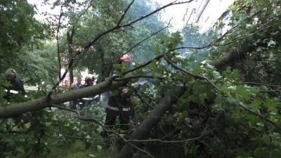 Повалені дерева в Чернівцях пошкодили два автомобілі та маршрутку