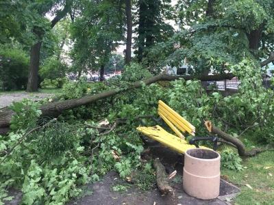 Негода в Чернівцях повалила дерева у сквері на Соборній площі - фото