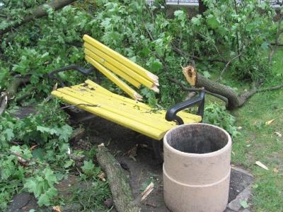 Негода в Чернівцях: комунальники прибирають повалені дерева - фото