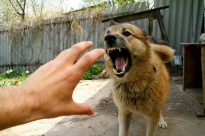 У селі на Буковині оголосили карантин через скаженого собаку, яка вкусила чоловіка