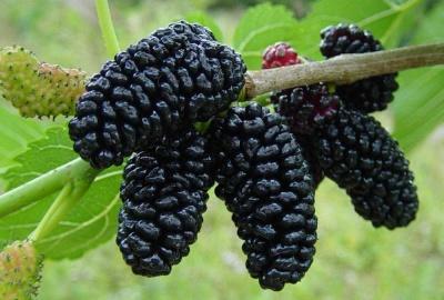 Яка рослина попереджує інсульт та очищує кров