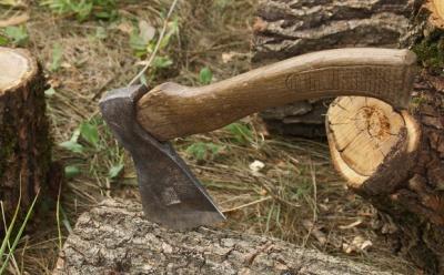 Завдав шкоди майже на 200 тисяч: буковинця підозрюють у незаконній порубці лісу