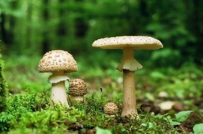 64-річного буковинця госпіталізували через отруєння грибами
