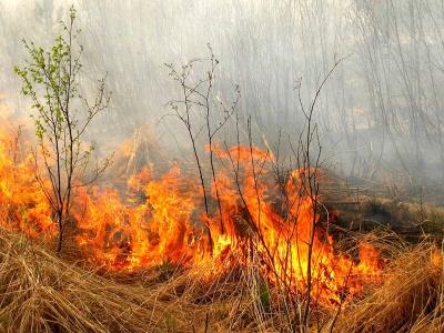 Може згоріти будинок: рятувальники розповіли, чому не треба палити суху траву