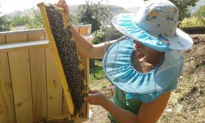 Відновила пасіку з одного вулика. У Чернівцях чиновниця у вільний від роботи час займається бджолами